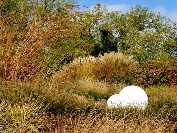 Gräsersorten gräsergarten oder präriegarten planen und einrichten