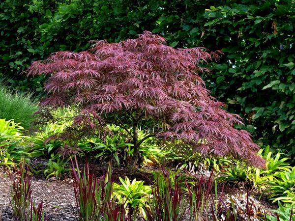 Gräser Garten gräsergarten oder präriegarten planen und einrichten